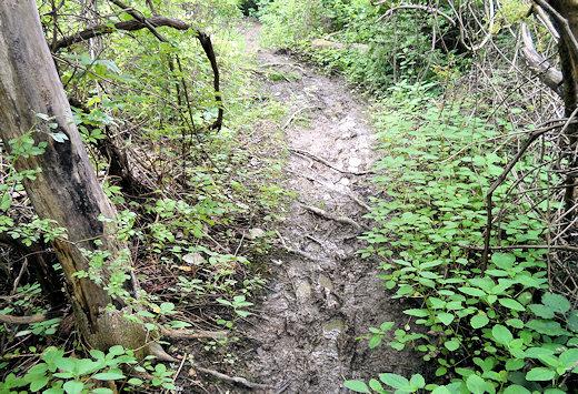 boyce mayview park muddy trails
