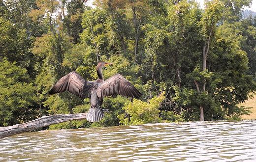 Canonsburg Lake Dam Waterfowl at Canonsburg Lake