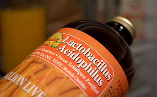 lactobacillus acidophilus for healthy gut flora