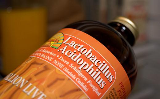 lactobacillus acidophilus for healthy gut flora
