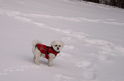 max hurrta winter dog jacket