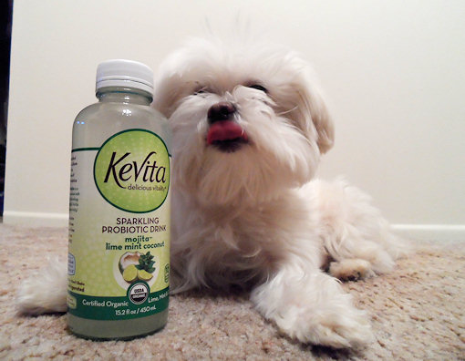 max the dog and his kevita drink
